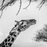 Čtenářský cestopis: Jana Kupčáková – Tanzanie