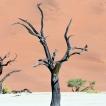 Čtenářský cestopis –Martin Pluhař   Africká zima