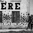 Crows / Foto Dalibor Papcun