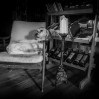 Lady | Foto Markéta Butalová
