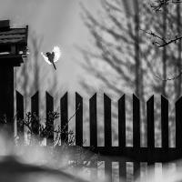 U krmítka | Foto Markéta Butalová