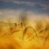 Zlato | Foto Markéta Butalová