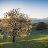 Nikon kalendář 2020 –semifinále | Krásy jara, foto Radim Ziman