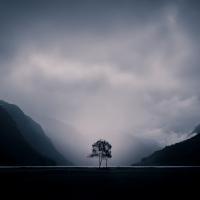 Nikon kalendář 2020 –semifinále | Tree, foto Pavla Nečasová