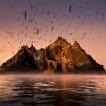 Příběhy divokého oceánu / Wild Ocean Stories © George Karbus: Ostrov Skellig Rock je druhá největší kolonie tereju v Evropě. Západni pobřeží Irska / Skellig Rock Island is the second biggest colony of the terej in Europe. West Coast of Ireland