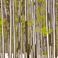 Dva v jednom (V pralese u Hradce nad Moravicí) | Foto Václav Hýža | Panorama z 38 snímků, 2× EBKT