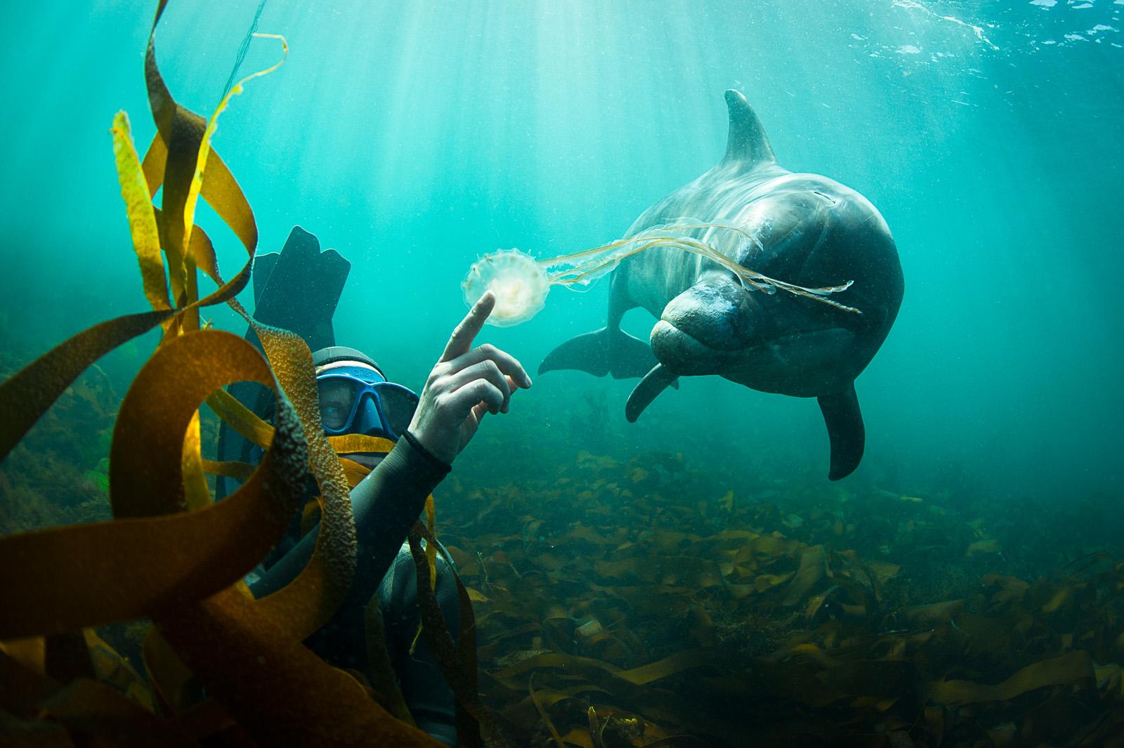 Příběhy divokého oceánu / Wild Ocean Stories © George Karbus: Přítelkyně Kata s divokým přátelským delfínem. Západní pobřežíIrska / Friend Kata with a friendly wild dolphin. West Coast of Ireland