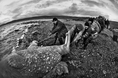 Martin Wágner: Lovci mrožů - Čukotský poloostrov 2004