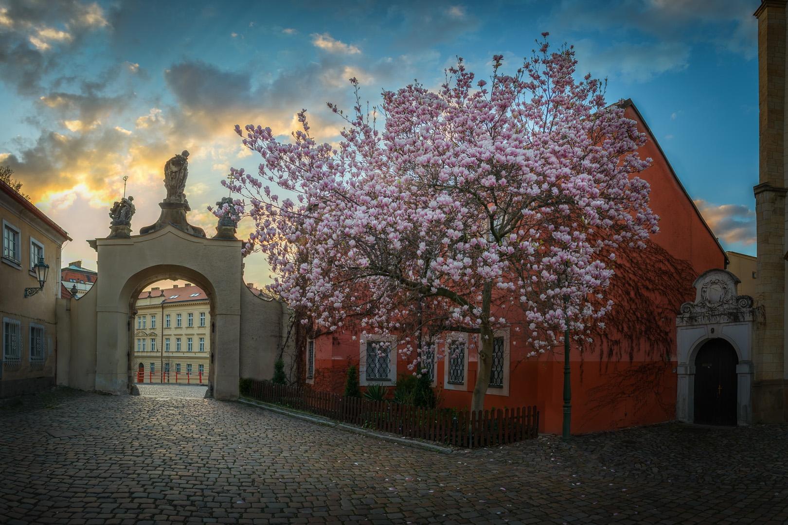 Tajemná Praha / Mysterious Prague | © Richard Horák: Magnolie u Strahovského kláštera / Magnolia at the Strahov Monastery