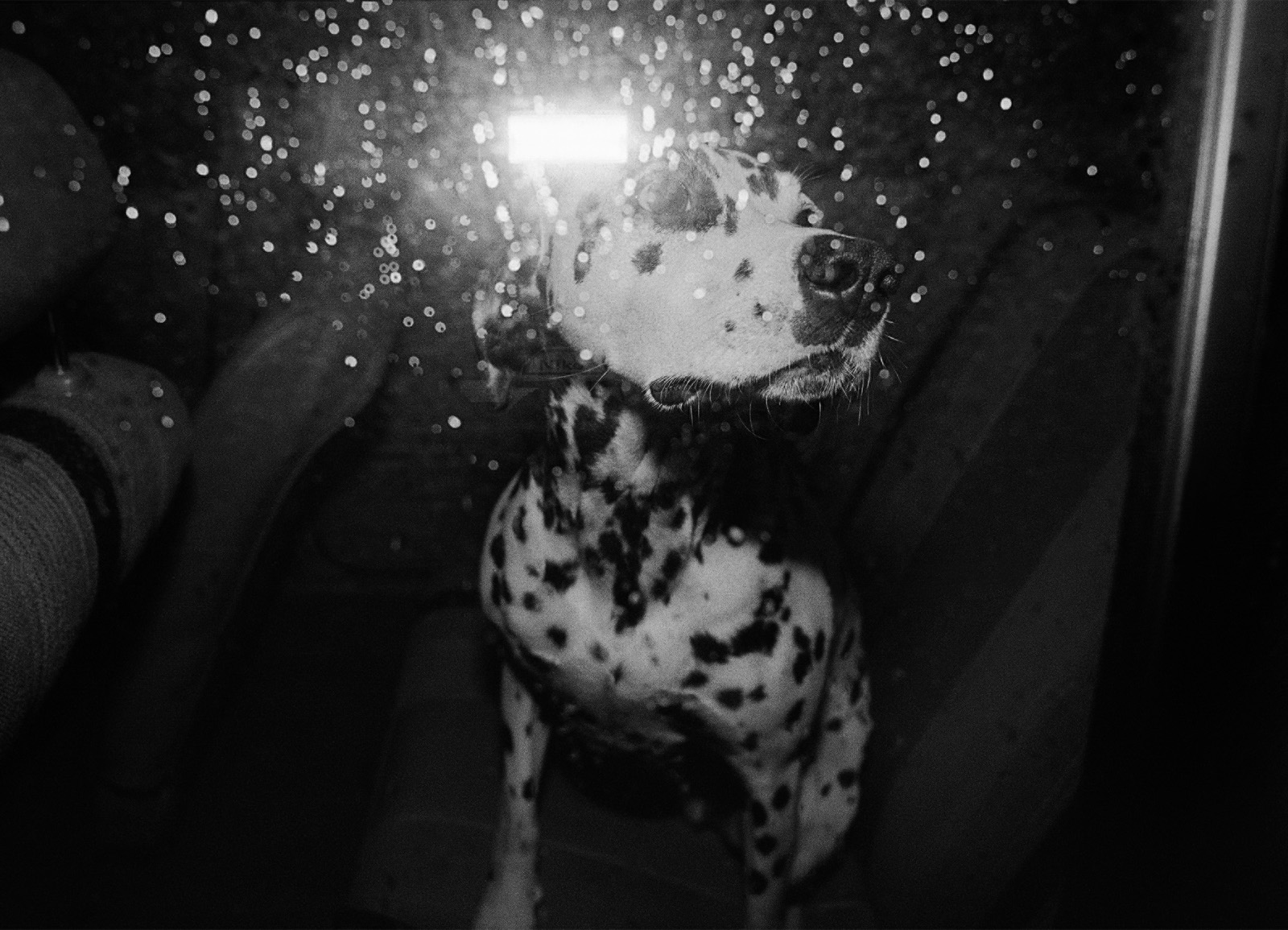 PAMĚTI NOCI – PRAHA 1983 / NIGHT MEMORIES – PRAGUE 1983 © PETER ŽUPNÍK: Psí noc / Dog's Night
