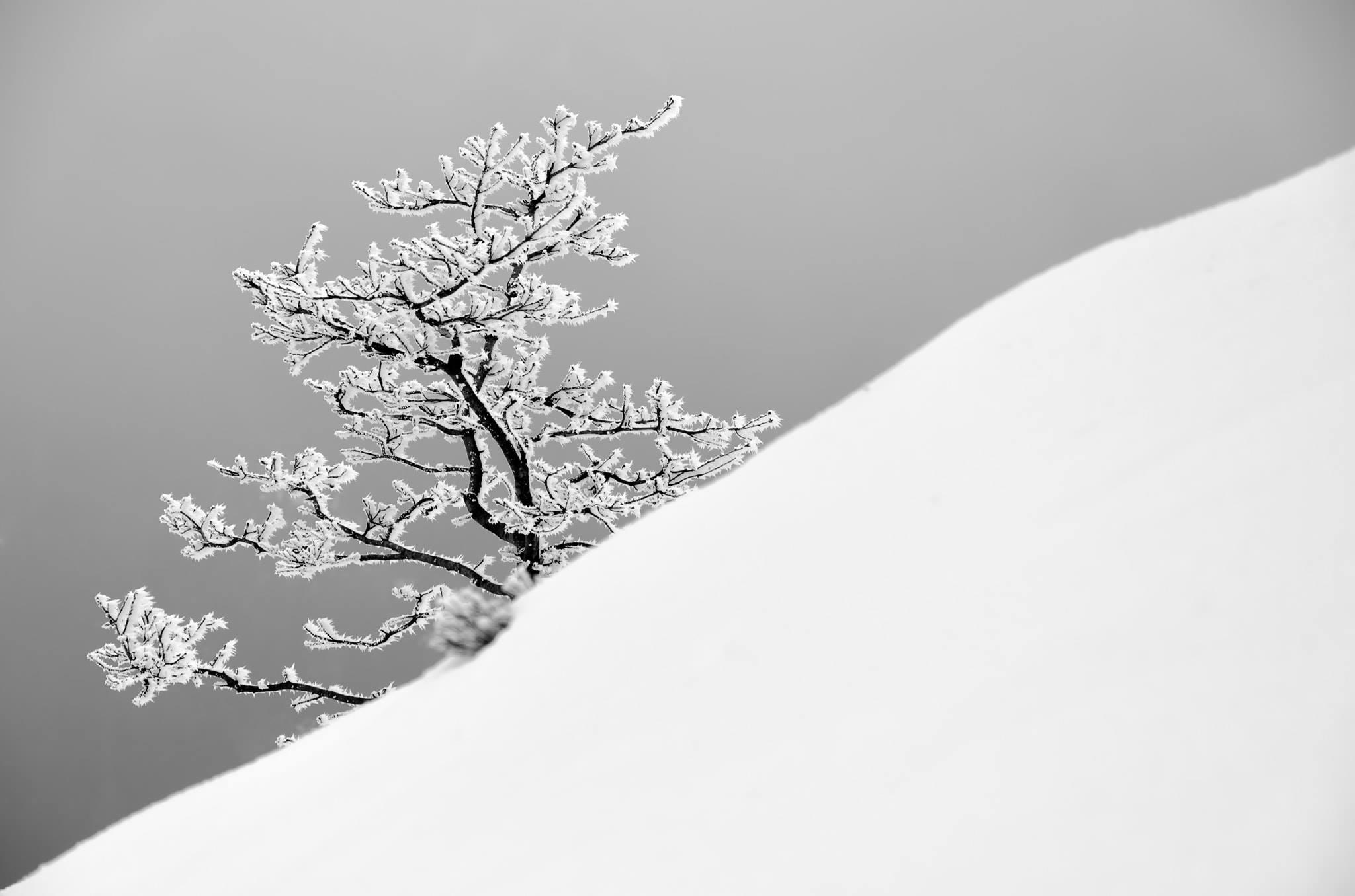 Vítězná fotografie 10. kola soutěže Fotka měsíce Nikonblogu 2019 | Tree | Foto Robert Průcha
