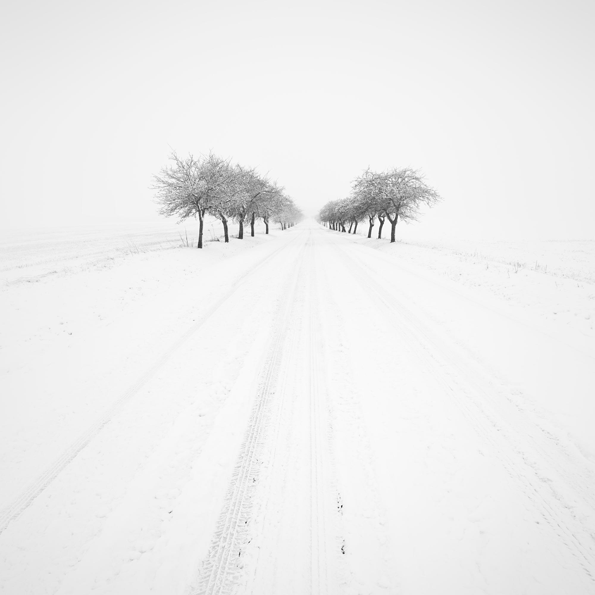 Cesta vpřed | Foto Tomáš Tisoň