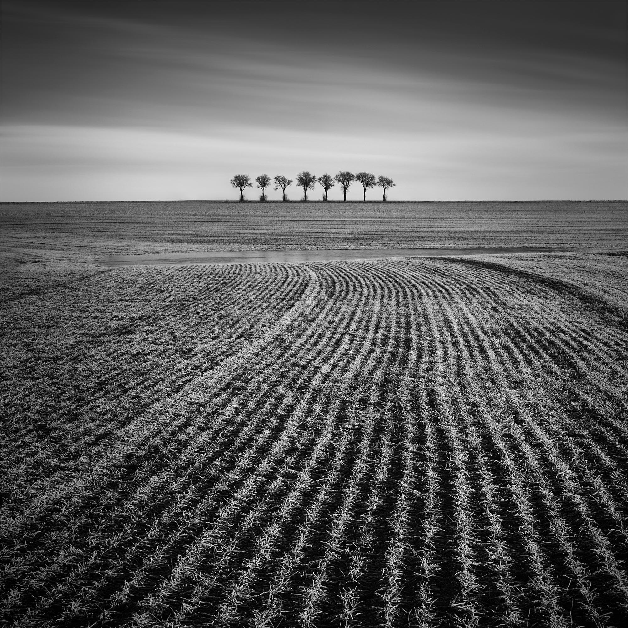 Osm stromů | Foto Tomáš Tisoň