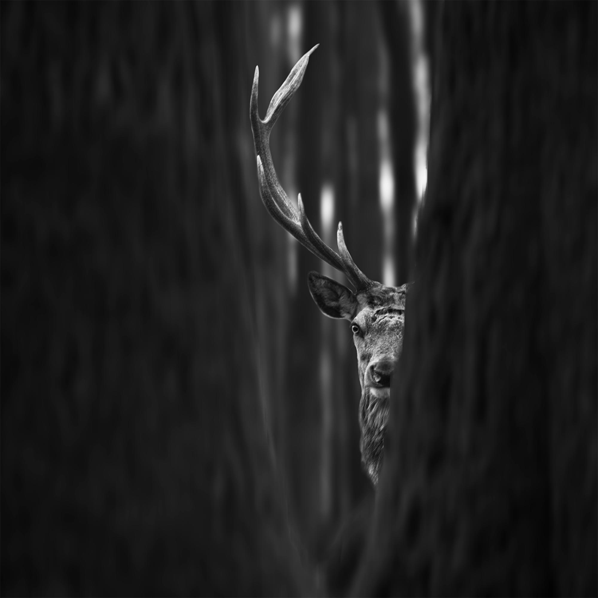 Vidím tě | Foto Tomáš Tisoň
