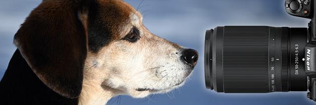 Když se řekne příjemné překvapení. Nikkor Z DX 50–250mm f/4,5–6,3 VR v testu Nikonblogu
