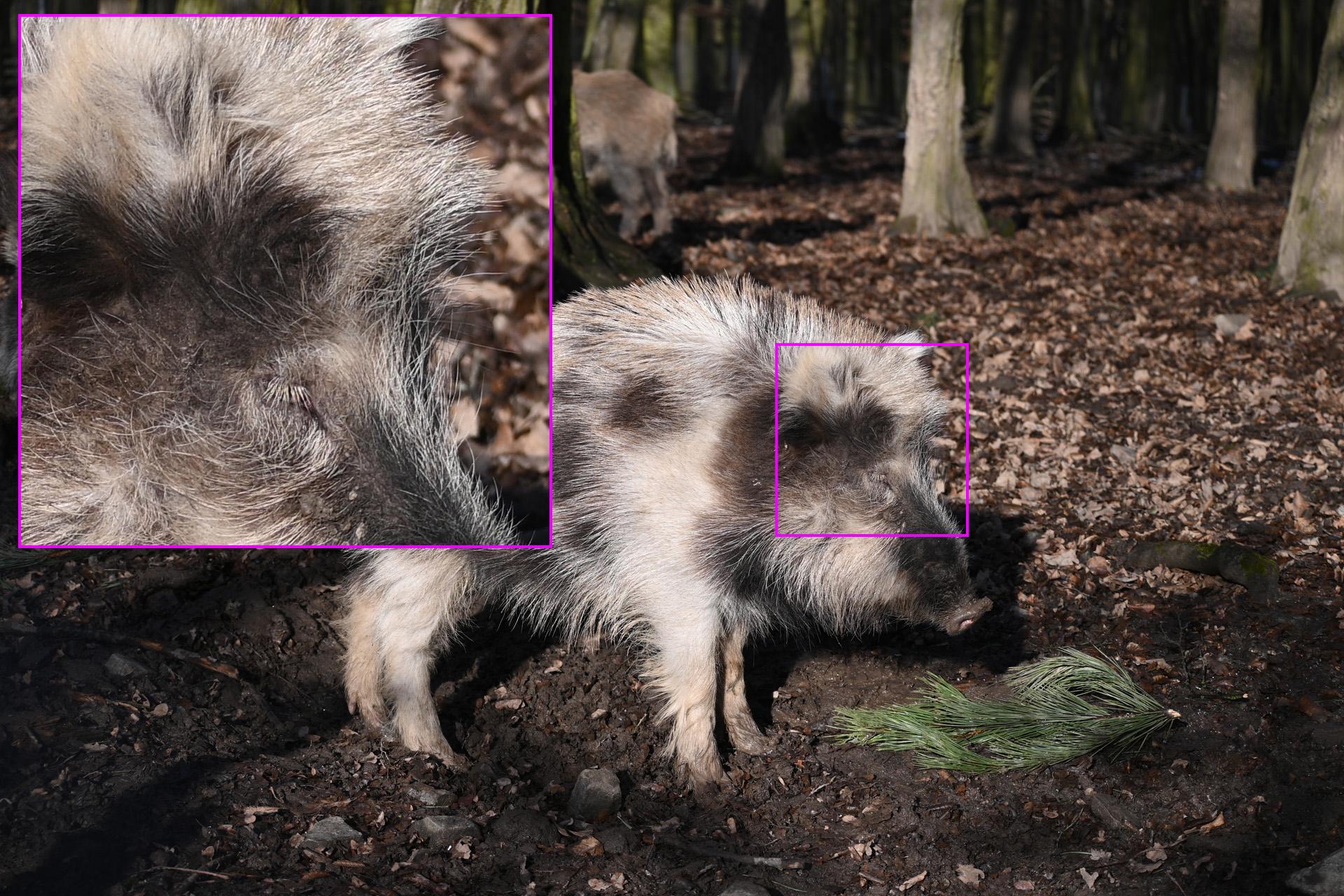 Fotografie v JPEGu bez úprav. Ohnisko 64 mm, plně otevřená clona (F4,8)