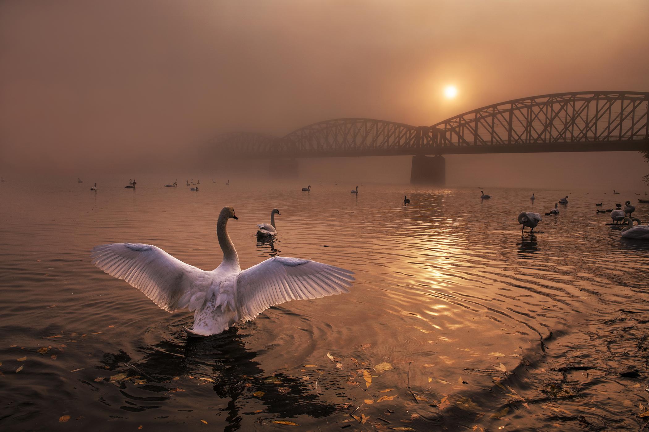 Fotografia z Nikon kalendára 2020 | Pozdrav slunci, foto: Peter Čech