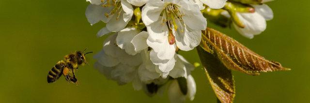 Zachyťte nejčerstvější zelenou –květnová Fotka měsíce Nikonblogu začíná