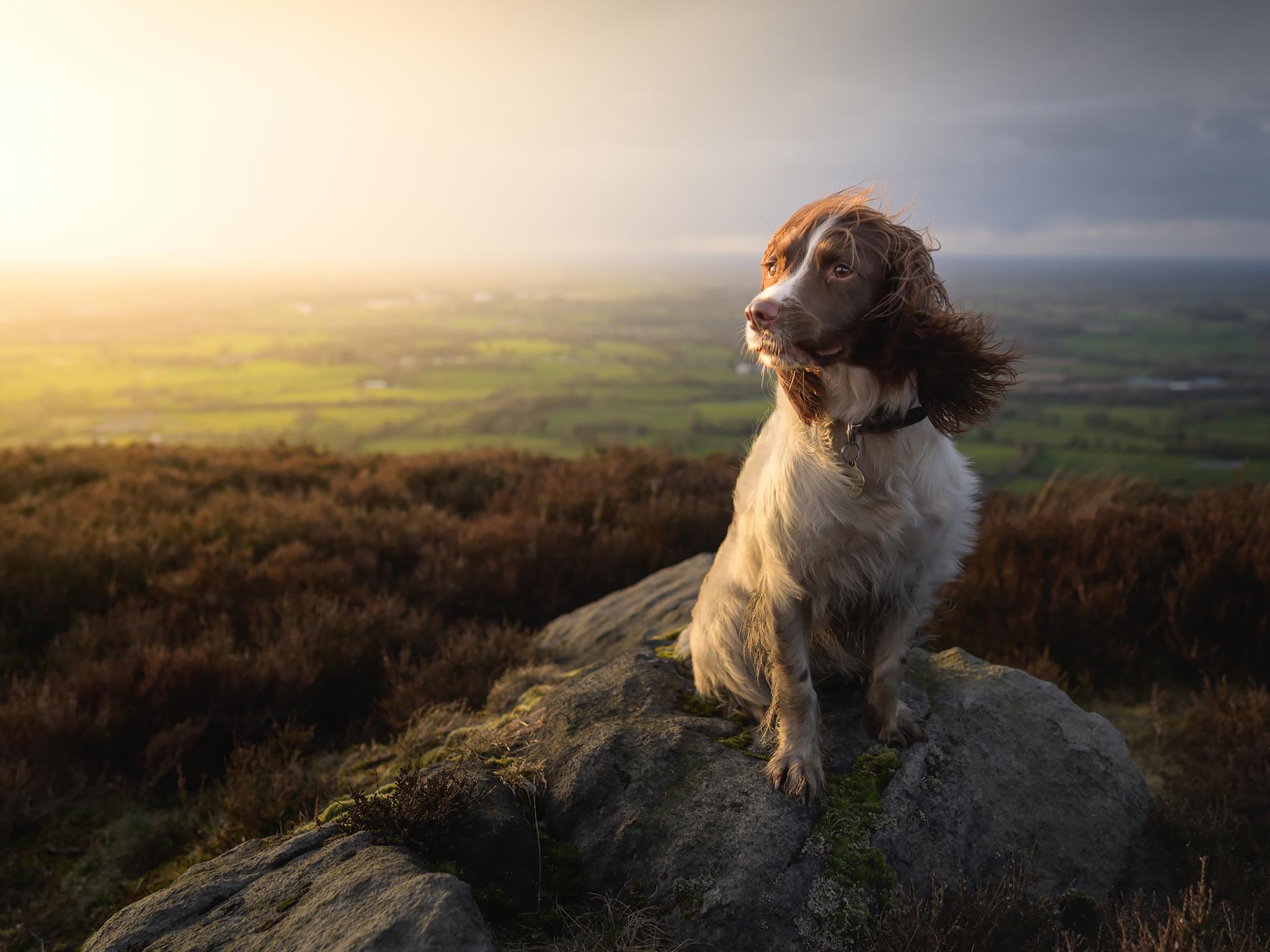 Využijte měkké a teplé světlo zapadajícího slunce | Foto Nigel Danson