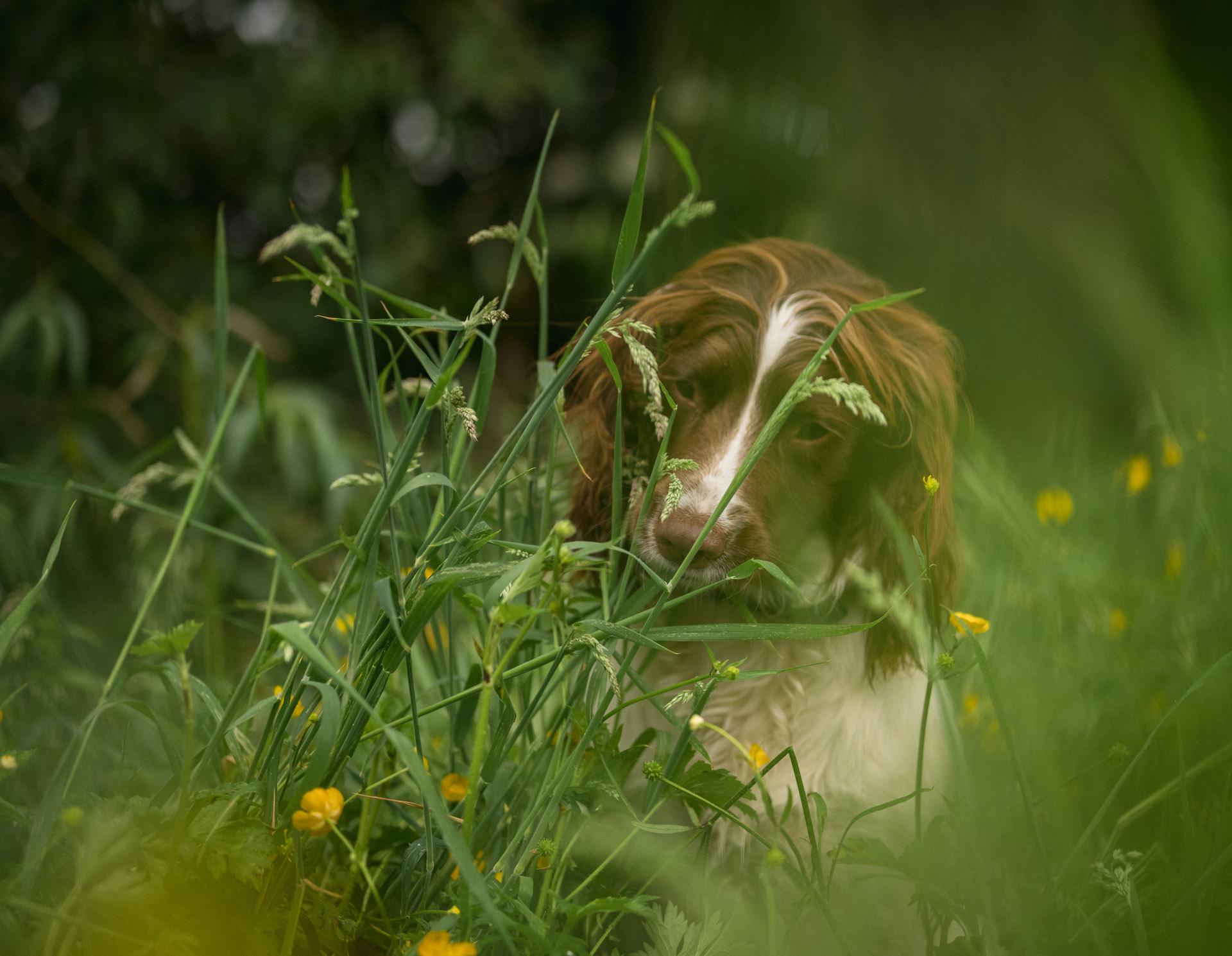 Zkuste vaše zvíře skrýt v zarostlé zahradě | Foto Nigel Danson