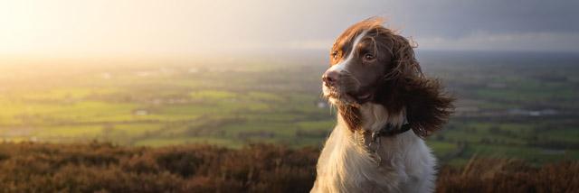 Create Your Light: Fotografování domácích zvířat s Nigelem Dansonem a Pebbles