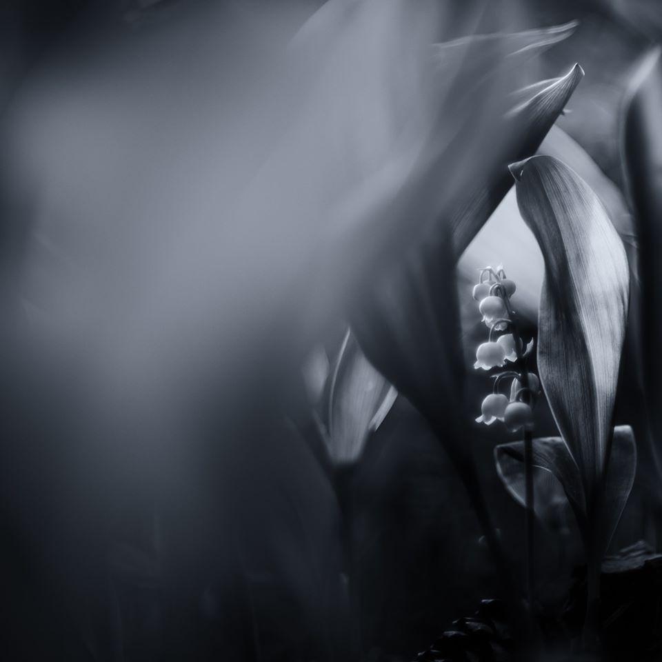 Konvalinky | Foto Markéta Butalová