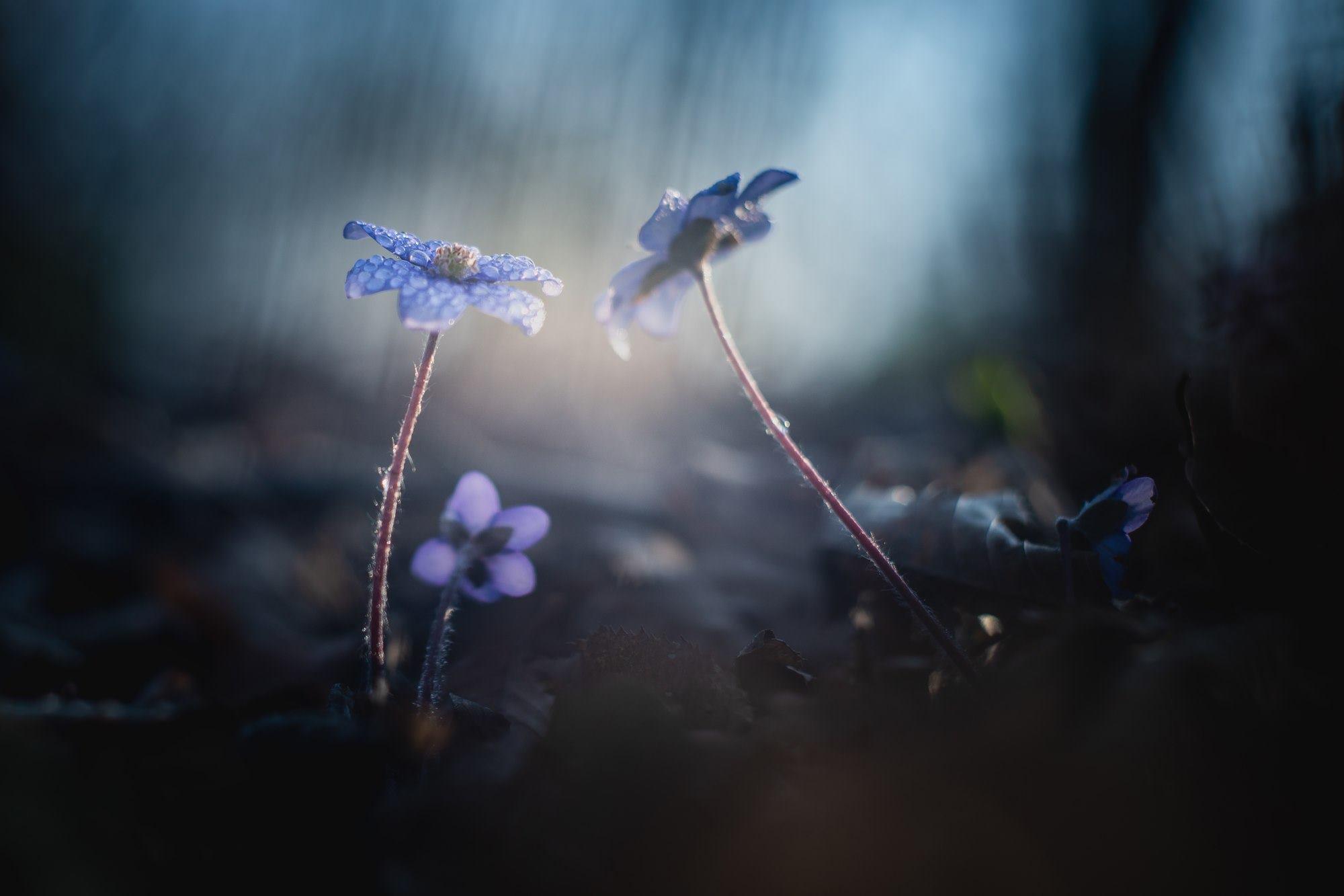 Orsejky | Foto Markéta Butalová
