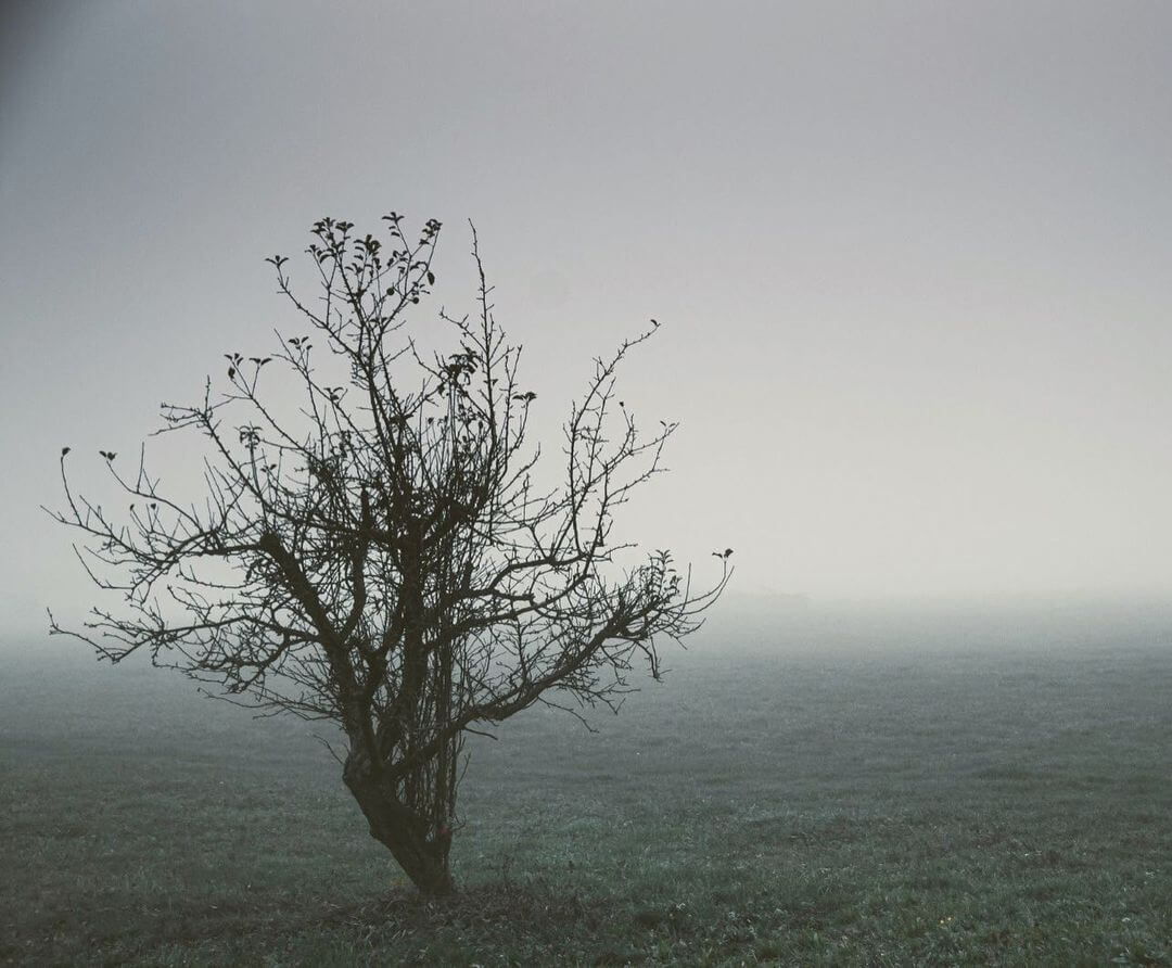 Mlha u Domažlic | Foto @karelpolakphotography (Karel Polák)