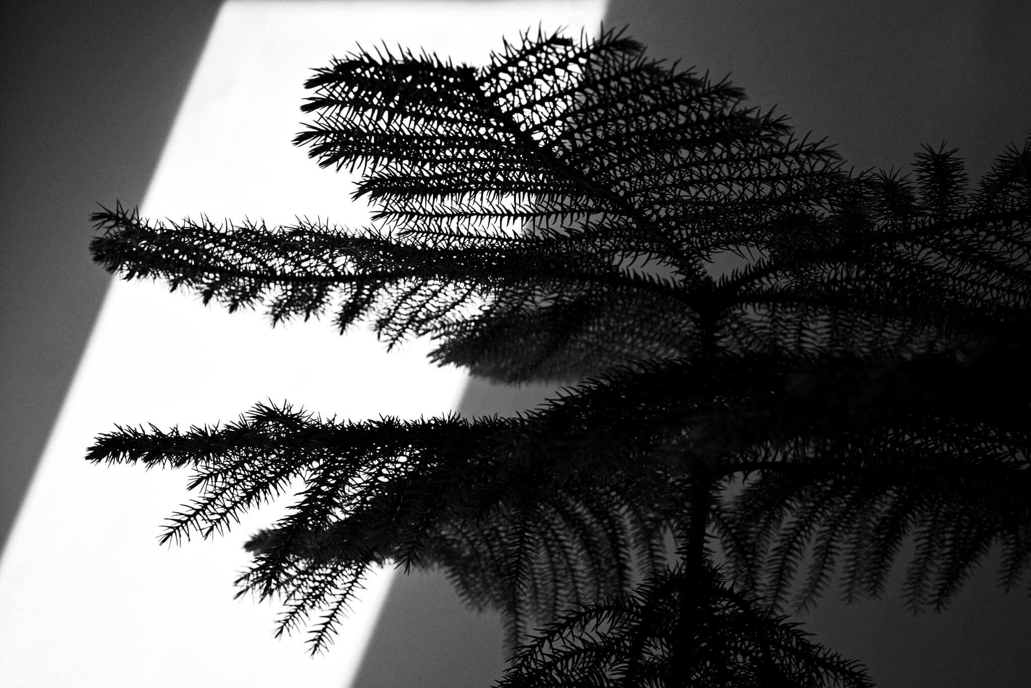 Jen tvary, světla a stíny… | Nikon Z 5 + Nikkor Z 24–50 mm f/4–6,3 VR | 50 mm, 1/40 s, F11, ISO 50