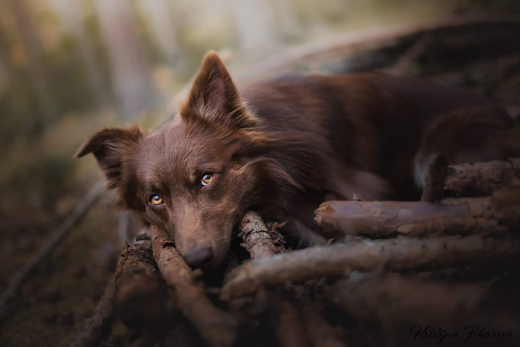 Foto Kristyna Fikarová