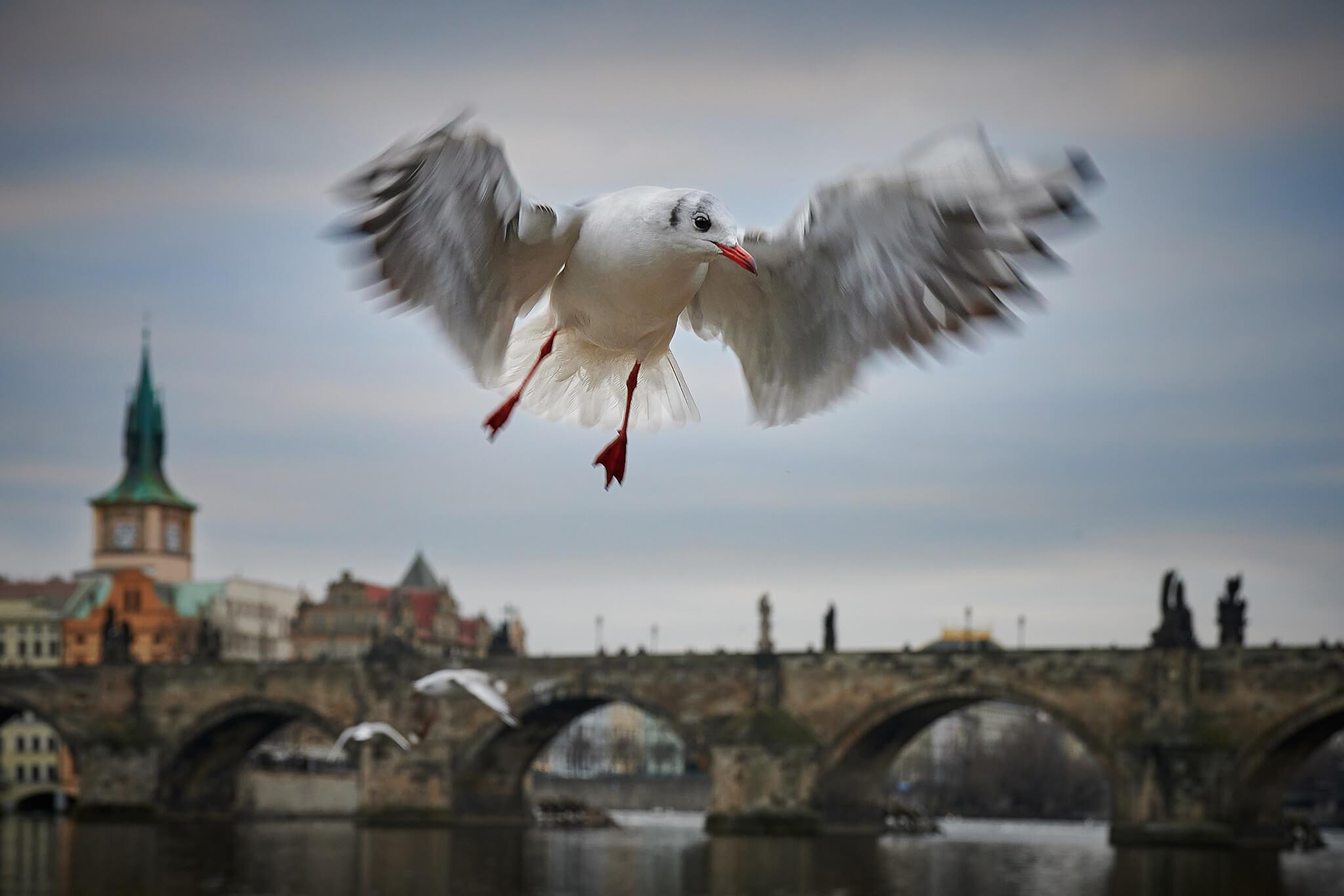 Foto Radek Průša