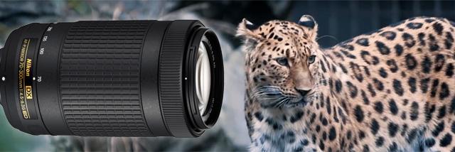 Fotosoutěž JSEM | Nikon v přírodě podruhé! Tentokrát je ve hře telezoom AF-P DX NIKKOR 70–300 mm