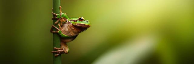 Soutěž JSEM | Nikon v přírodě ukončena. A my známe vítěze!