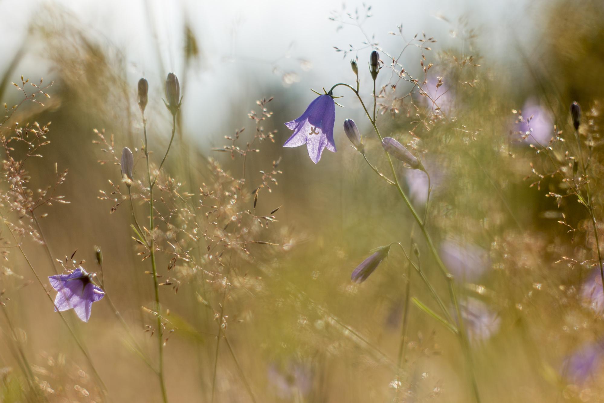 Pohled travní | Foto Markéta Butalová