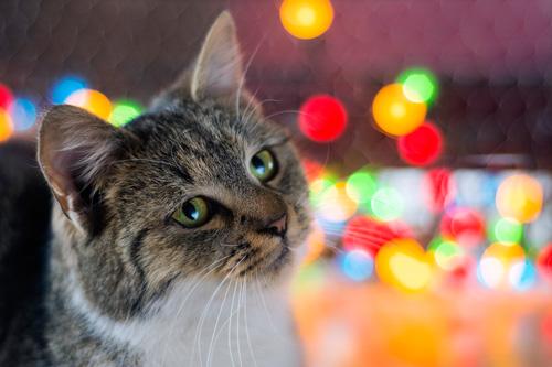 JSEM   Fotka měsíce Nikonblogu