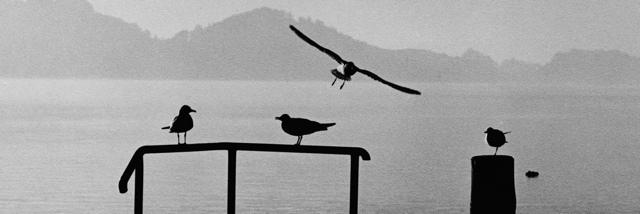 Tiché krajiny Jiřího Bartoše v Nikon Photo Gallery