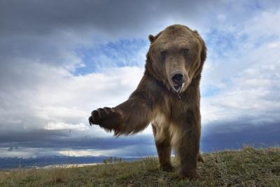 Grizzly, Montana, USA | Foto Petr Slavík