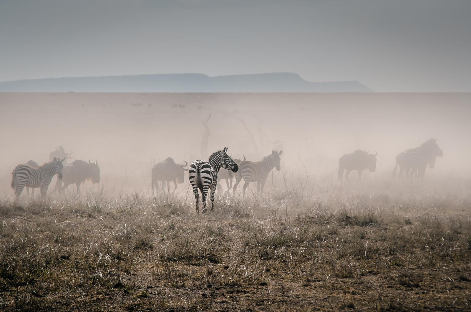 Čtenářský cestopis: Jana Kupčáková – Tanzánie