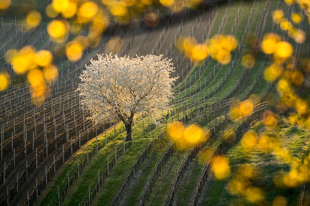Fotografie z Nikon kalendáře 2019 | Osvícený –Foto Vojtěch Herout