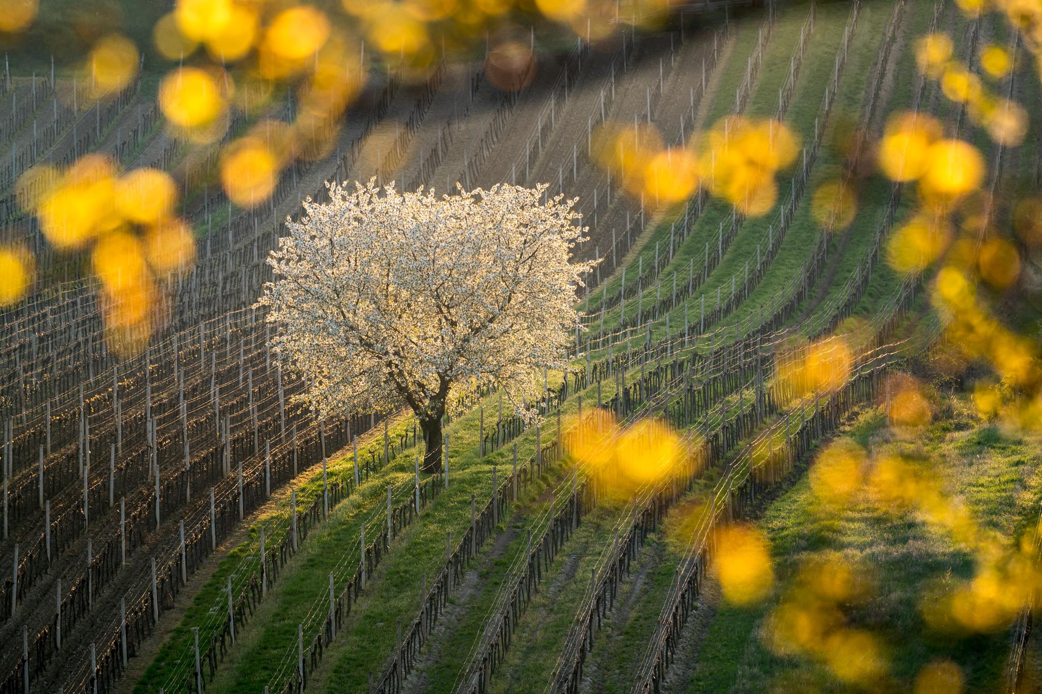 Osvietený (fotografia z Nikon kalendára 2019) | Foto: VOJTa Herout