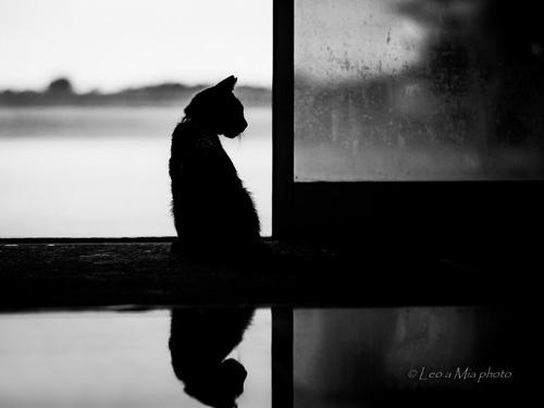 SOM | Fotka mesiaca Nikonblogu – september v znamení jesennej melanchólie